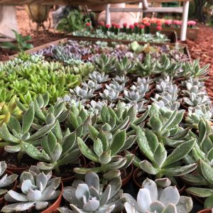 Succulent Terrarium DIY Event