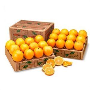 florida valencia orange